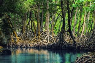 800px-Dominican_republic_Los_Haitises_mangroves