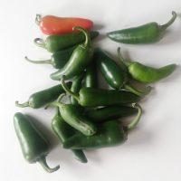 Jalapeño zaden