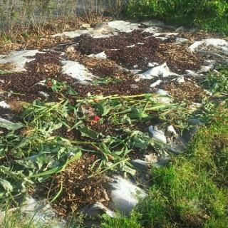 Olifantenpoep - karton - snippers - dode planten