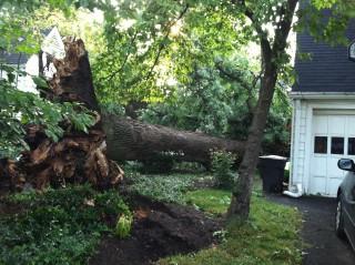 Omgevallen boom Magnus Manske